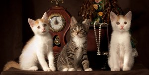 bigstock_Three_Kitten_8455882_1.jpg